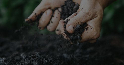 How to bring life to dying soils