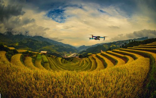 Five ways we can feed the world in 2050