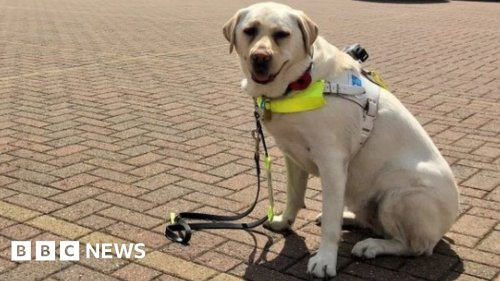The guide dog that spies on people who ignore its owner