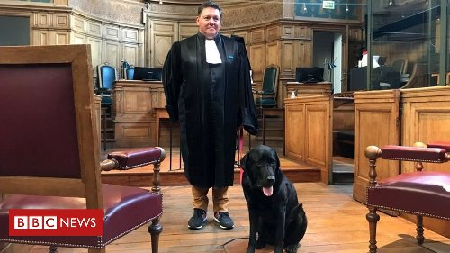French court dog helps soothe anxious victims of crime