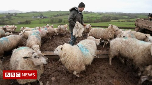 US lifting ban on imports of British lamb, says Boris Johnson