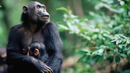 Why Jane Goodall is hopeful in 2021