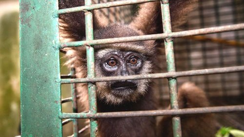 Income inequality 'drives global wildlife trade'