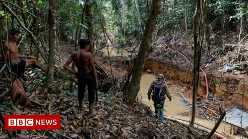 Brazil Amazon: Illegal miners fire on indigenous group