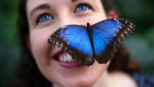 Butterflies: The ultimate icon of our fragility