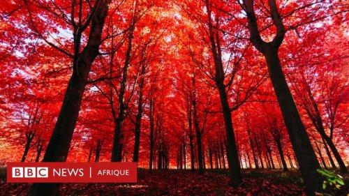 Un arbre fait-il du bruit quand il tombe si personne n'est là pour l'entendre ? La réponse de la science et de la philosophie