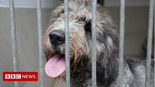 Covid: Dogs bought in lockdown being abandoned
