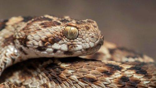 The global fight against snake bites