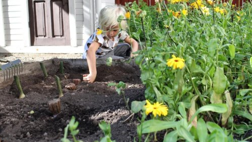 Starting a new garden? How to Test Your Soil for Lead