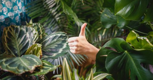 The ridiculously easy way to tell if your plants need watering
