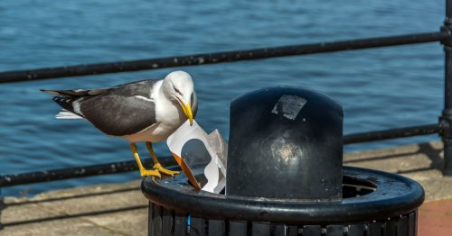 Council to install dozens of new 'bird proof bins' costing council 30k