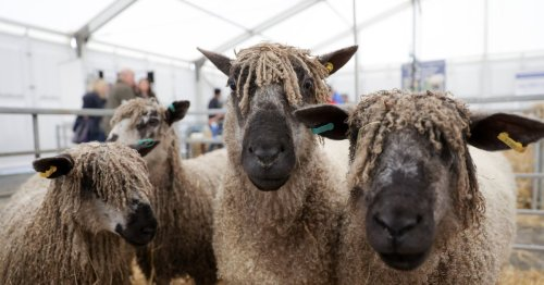 The Balmoral Show: All smiles at day two of the festival