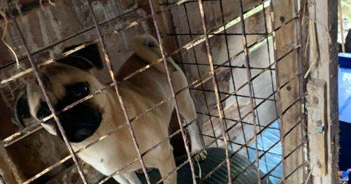 Police seize 18 dogs in suspected puppy farm raid