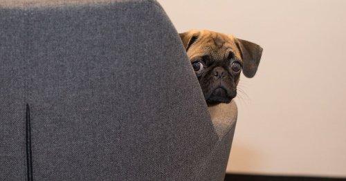 NI vets declare a pet passport shortage just as summer arrives