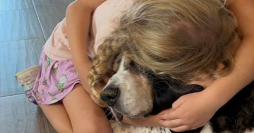 TV vet Rory says dogs suffer grief and need time to mourn