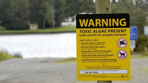 People, pets told to stay out of this Whatcom lake because of toxic algae