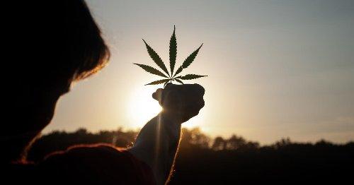 Cannabis Movers & Shakers: CMW Media, Phyto Extractions, Organigram, GrowGen, Harborside