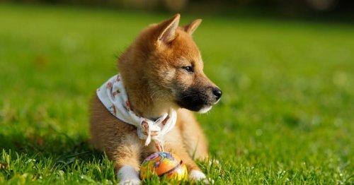 Ethereum Co-Founder Vitalik Buterin Burns 410 Trillion Shiba Inu Tokens. Is The Dogecoin Clone Set For Another Bull Run?