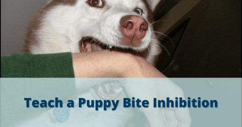 How To Teach Puppy Bite Inhibition?