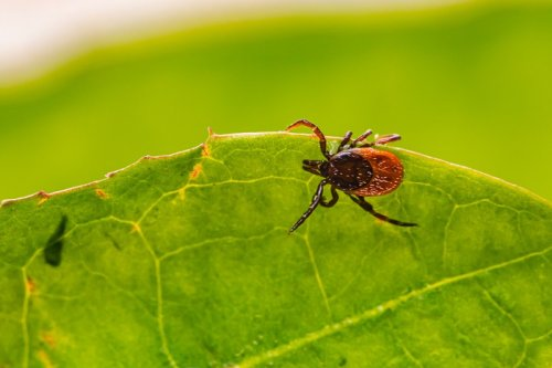 Natural tick killers that work well