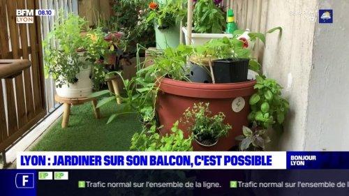 Lyon: cette start-up a créé un potager composteur à installer sur son balcon