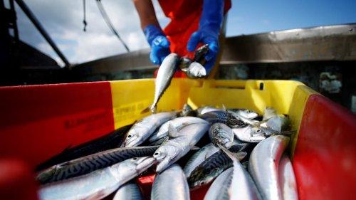 Pêche post-Brexit: le Royaume-Uni s'indigne à son tour des menaces françaises contre Jersey