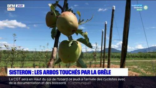 Grêle: les agriculteurs de Sisteron et Mison touchés