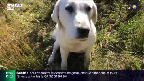 Tout Terrain : mieux comprendre les chiens de protection