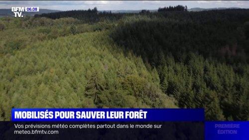 Dans le Morvan, des citoyens achètent des hectares de forêt pour la sauver
