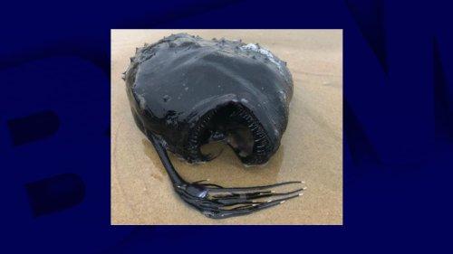 États-Unis: un rare poisson tout droit sorti des abysses retrouvé sur une plage