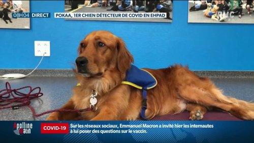 En Alsace, des chiens renifleurs détectent le Covid-19 dans les Ehpad