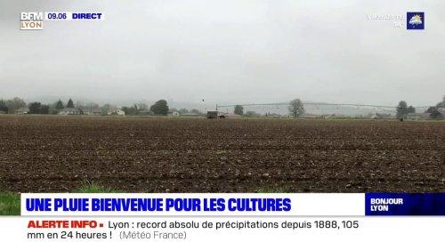 Sécheresse dans le Rhône: les fortes pluies soulagent les agriculteurs