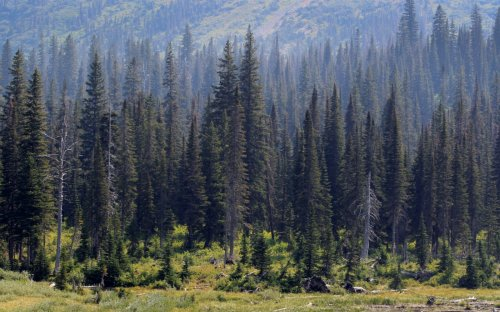 How trees could help researchers find human bodies in forests