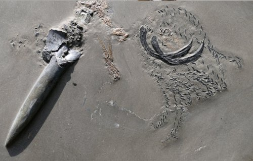 Researchers found a fossil of three sea creatures eating each other