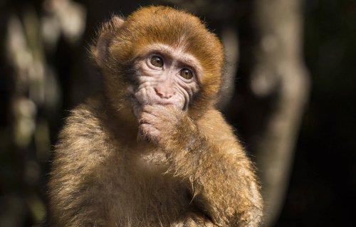 Two dozen monkeys escape German zoo, attempt to return to nature