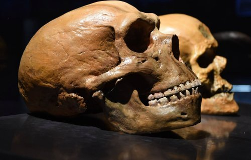 Neanderthals had huge brains and ate a lot of carbs