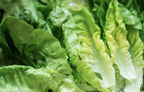 Viral TikTok reveals a brilliant way to keep lettuce fresh for a month