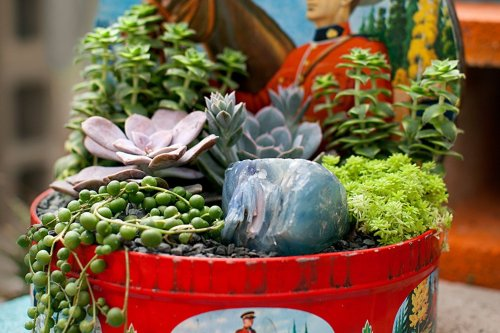6 easy DIY ideas using succulents and cacti