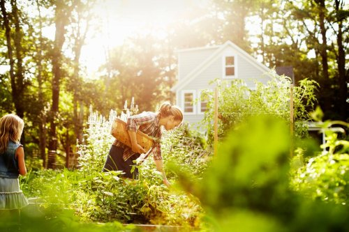 Why your veggie garden could be toxic