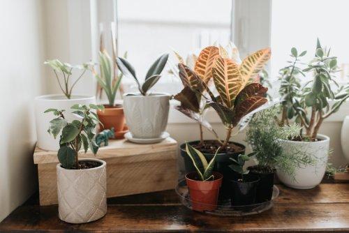 Moucherons : 9 astuces naturelles pour les chasser de vos plantes vertes ! - Biba Magazine
