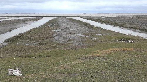 Hunderte tote Wildvögel im Kreis Leer