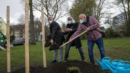 100 Bäume für Beuys in Köln