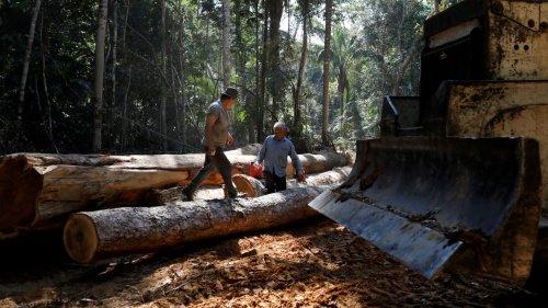 China steckt Milliarden Dollar in Regenwald-Rodung