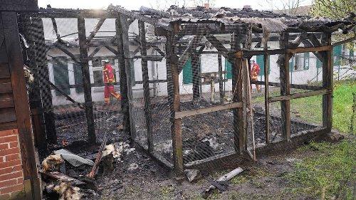 Seltene Hühner in Domäne Dahlem verbrannt