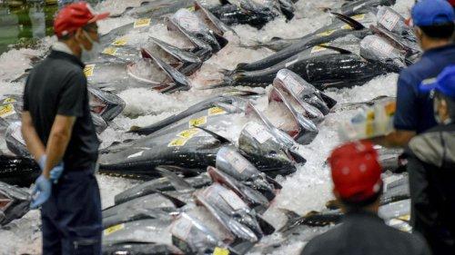 Wie die China-Flotte unsere Meere zerstört