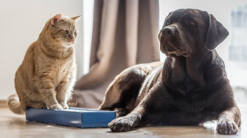 Wie gefährlich ist die britische Mutation für Haustiere?