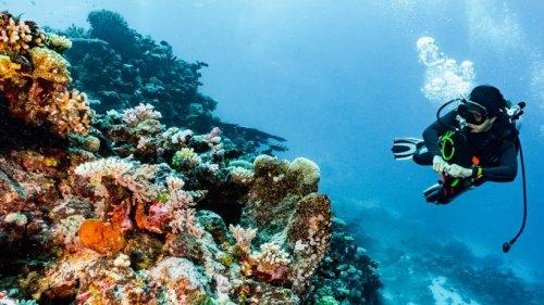 So groß wie ein Doppeldeckerbus: Beeindruckender Korallen-Fund im Great Barrier Reef