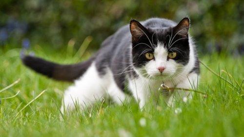 Katzen aus dem Garten vertreiben: Mit diesen tierfreundlichen Methoden klappt's!