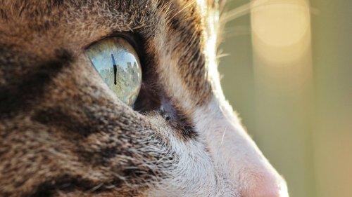 Wie sehen Haustiere die Welt? 360°-Tool ermöglicht spannenden Einblick