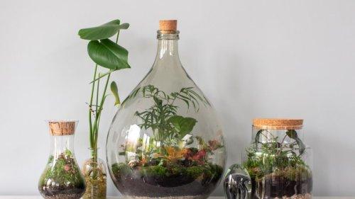 Flaschengarten anlegen: Schritt für Schritt zum Mini-Gewächshaus